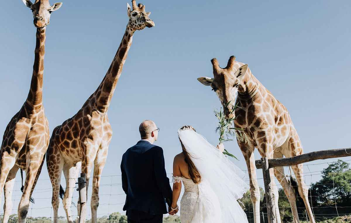 Unique Weddings at Werribee Open Range Zoo