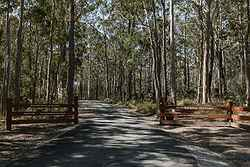 Outdoor Wedding Venue NSW - Bawley Bush Retreat at Real Weddings